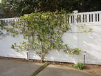 Privacy Fence with Thin Thick Pickets