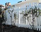Vinyl Picket Fence with Arched Scallops
